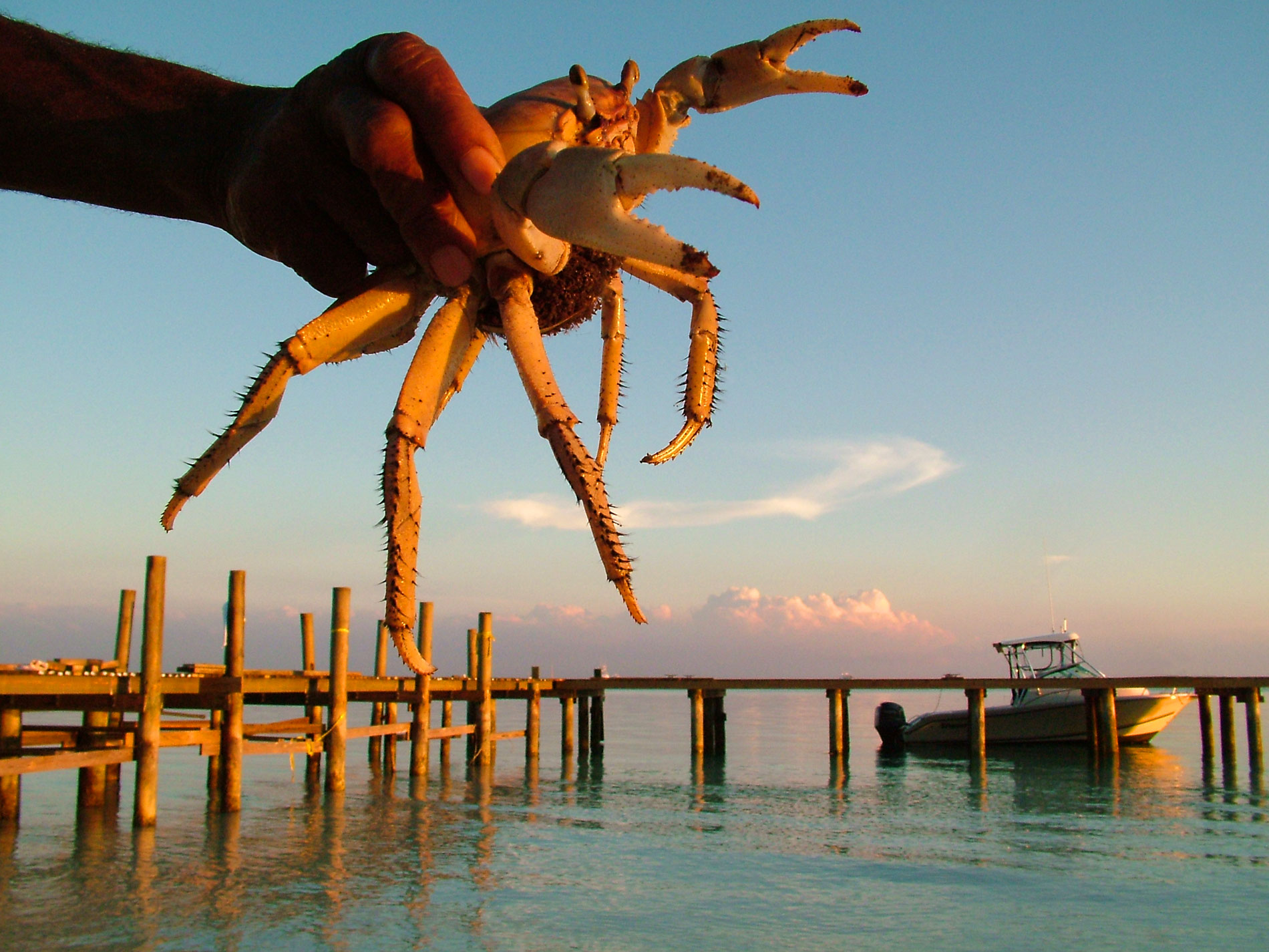 Crab with Dock Background