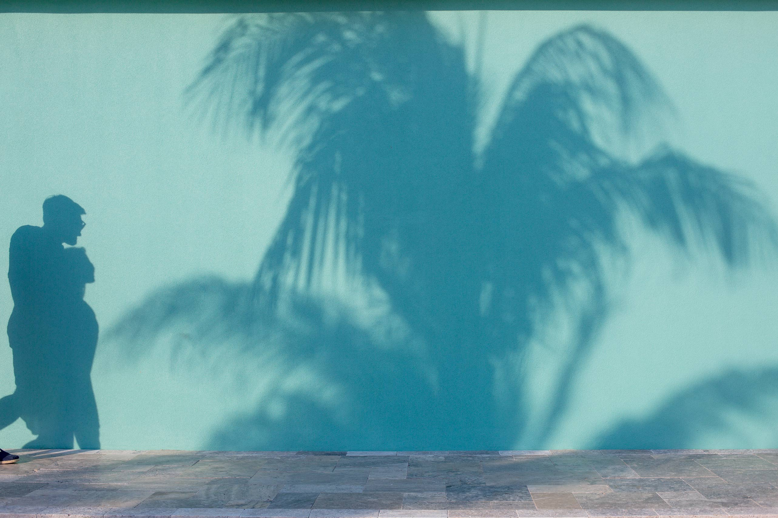 Palm_Shadow_1